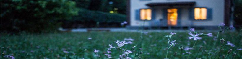 evening home lavender flowers